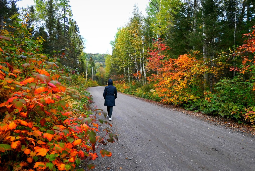 Fall scene to highlight courses at Granite State College.
